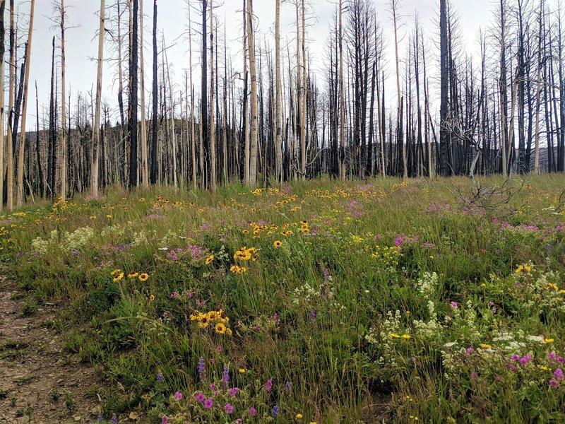 Wildflowers along Alice Creek.