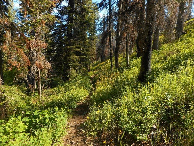 Arrastra Creek Trail.