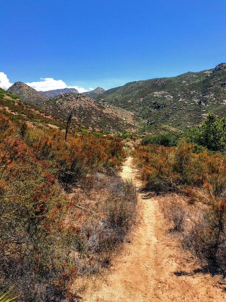 Breaking into more open trail