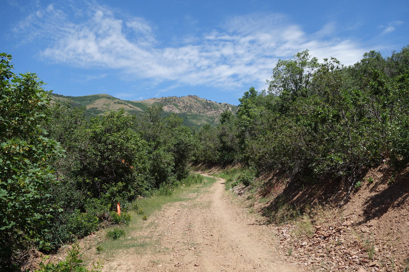 Wolf Creek Canyon doubletrack at the height of summer.
