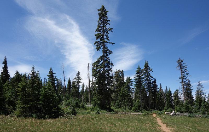Bristlecone Pine trail.