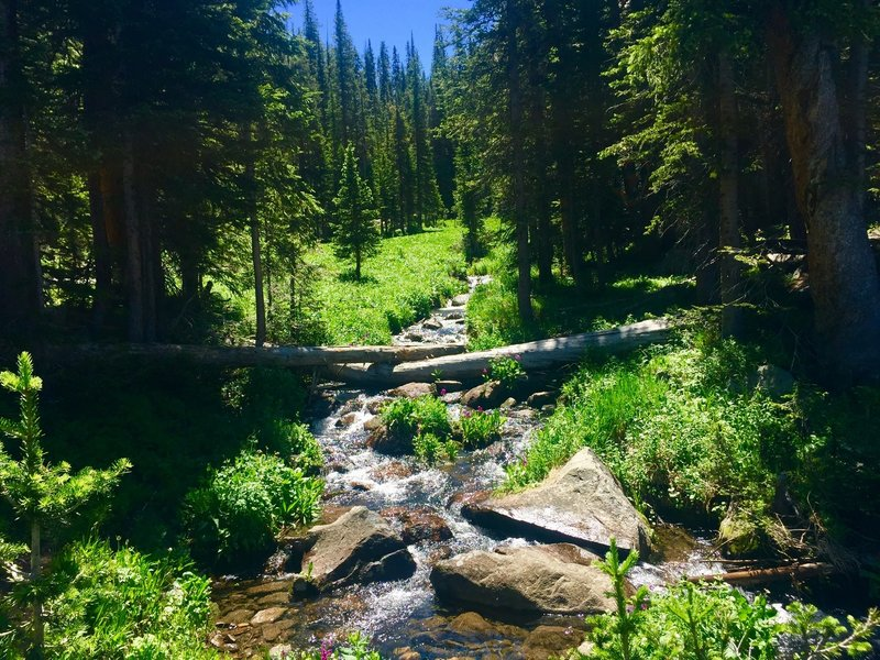 Creek along the Columbine Lake Trail, July 29, 2019.