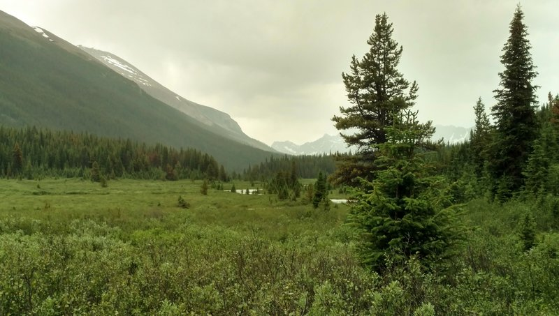 The Maligne River (center) in the Maligne River Valley, looking north from the west side of the Maligne River.