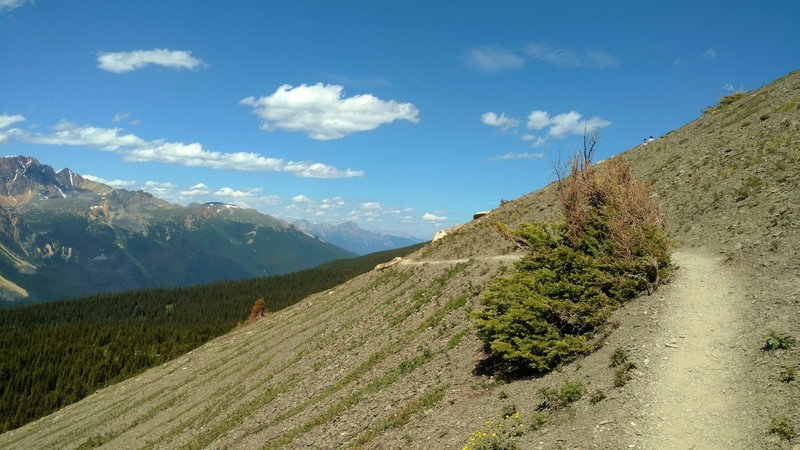 The views to the northwest from high on Cavell Meadows Trail.