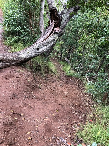 Start of trail on the right; very steep.