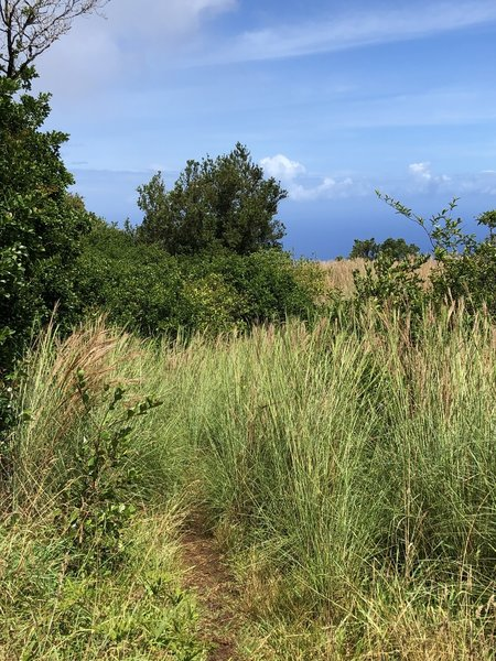 View from shelter toward cliff edge - this is to a vista; not the continuation of the trail!
