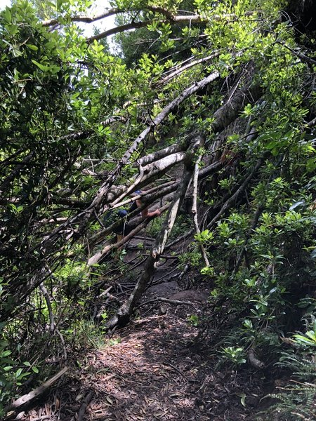 Lots of downed trees along the trail.