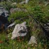 Wildflowers and granite.