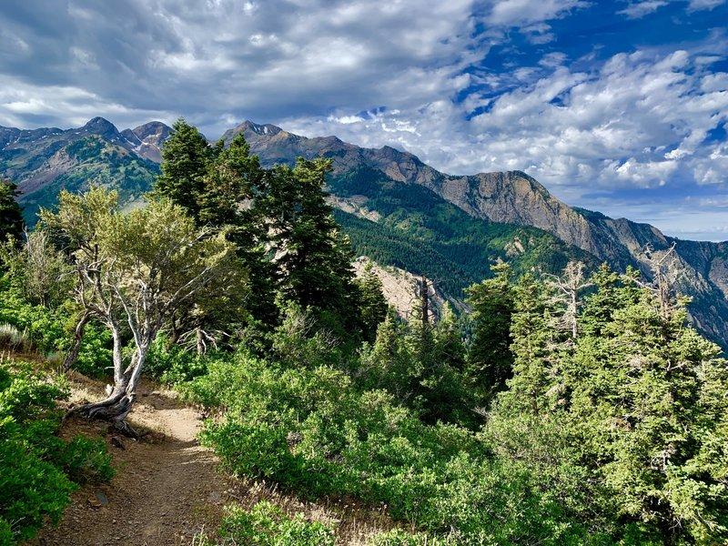 Along Mill B trail