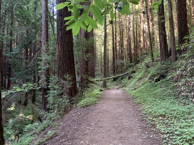 Trail next to creek
