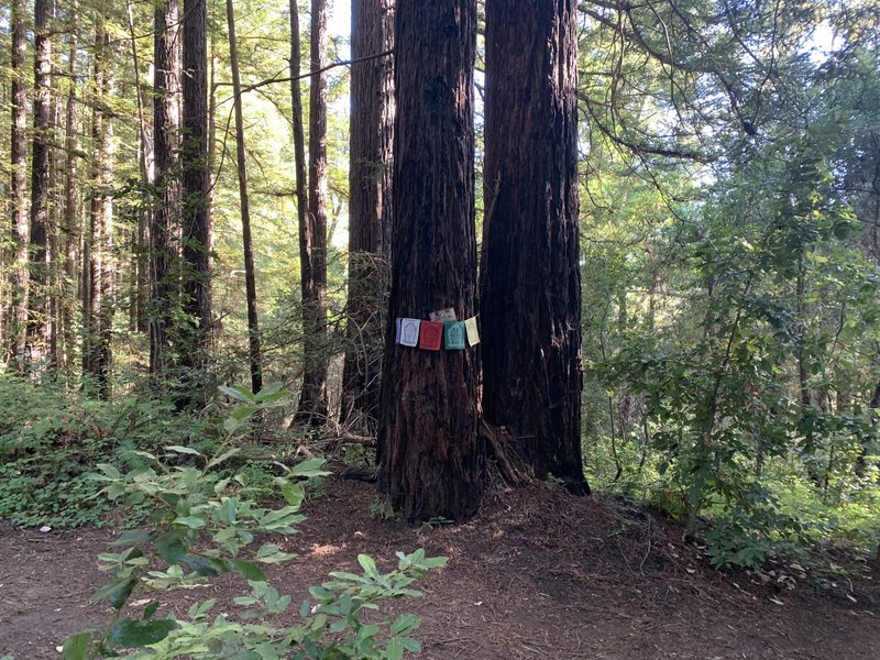 Left or right path of tree with prayer Flags leads back Land of Medicine Buddha