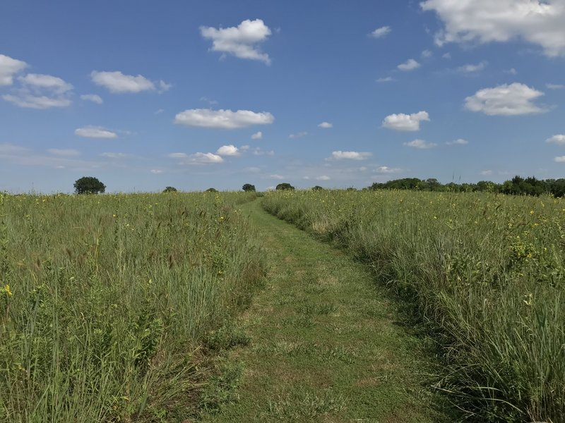 Trail through the prairie