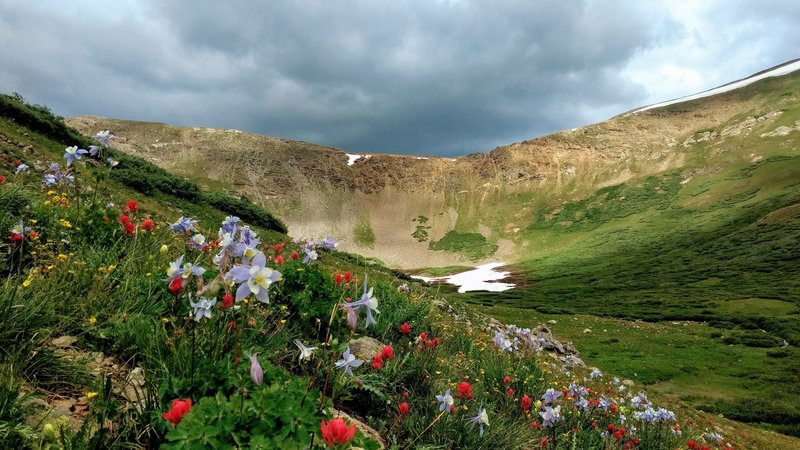 Wildflowers on the final ascent to Shelf Lake