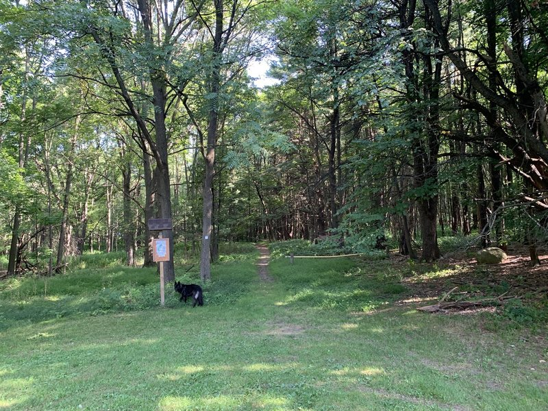 Trailhead of the Pine Woods Trail, featuring a detailed orienteering map.