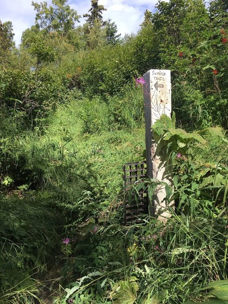 Beginning of the summer trail.  Beat through the tall grass to find you way.  The summer trail is a sweet narrow singletrack and avoids the bogs on the winter trail.