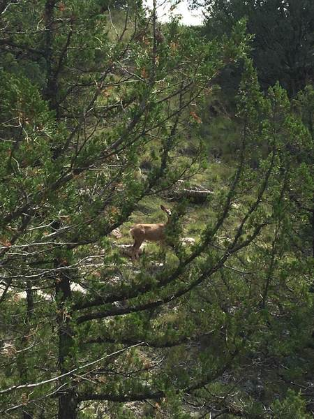 Female deer spotted above Two Pipe