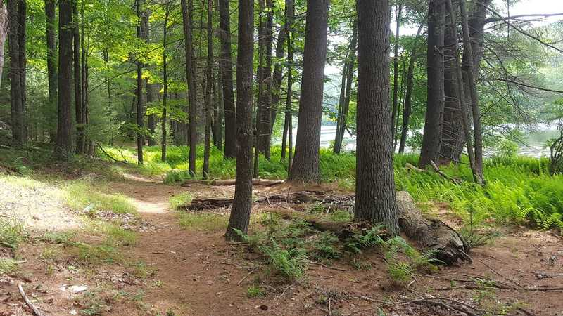 Port Jervis, NY - Brewer's Reservoir Loop:  On the Out N Back Trail