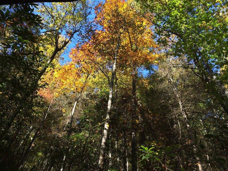 Brilliant colors along Laurel Creek