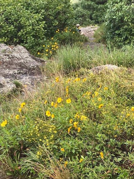 Flowers at the peak