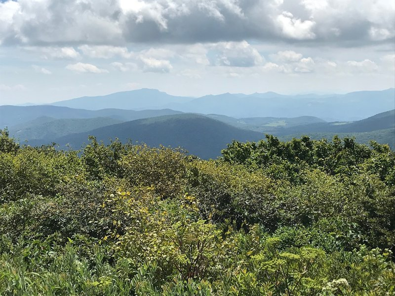 Grandfather Mountain from Elk Knob summit trail