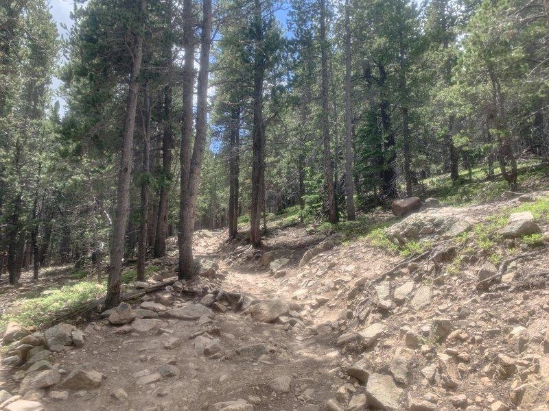 Longs Peak Trail, 10,000 feet.