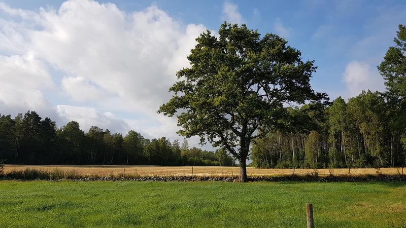 Landskap langs stien