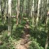 Aspen singletrack