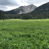 S Mt meadow