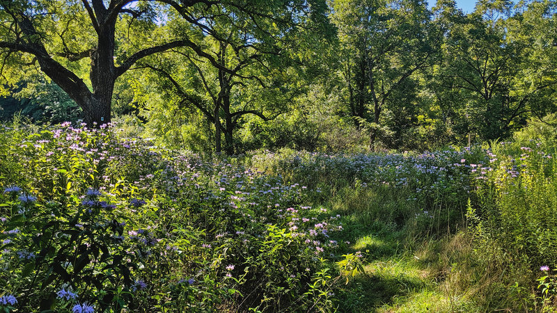 Blue Mountain Trail cuts alongside a field with wildflowers in Stokes State Forest, NJ.