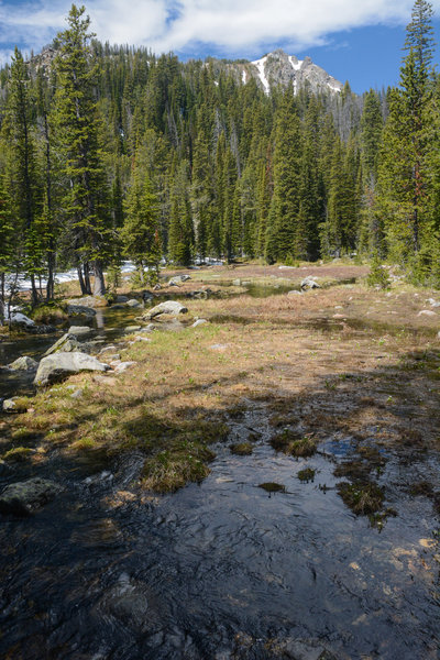 Early summer snow melt in a meadow