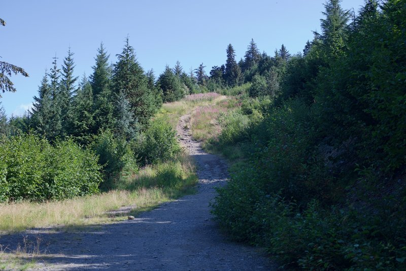 The trail follows a fire road for a short distance, and then narrows and starts climbing more steeply.