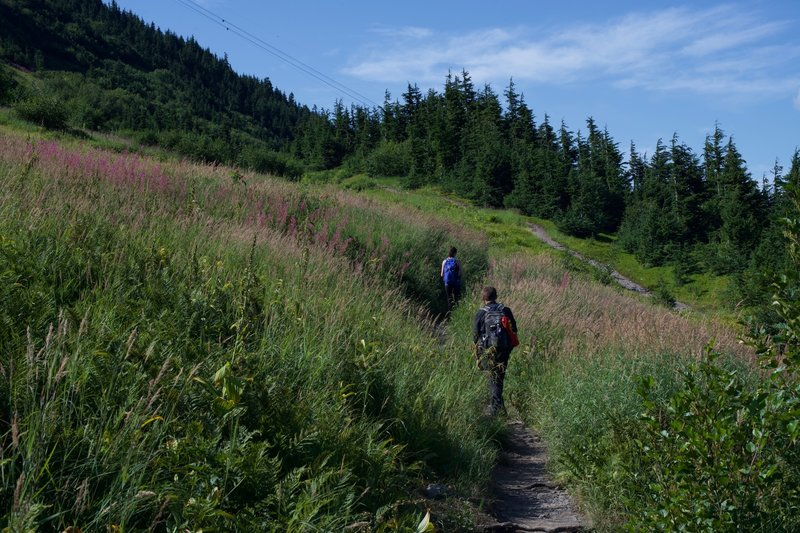 The trail climbs steeply through fields of wildflowers, including fireweed.