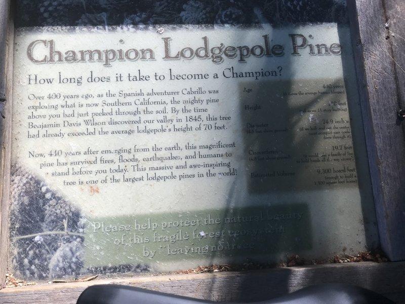 Pine tree placard