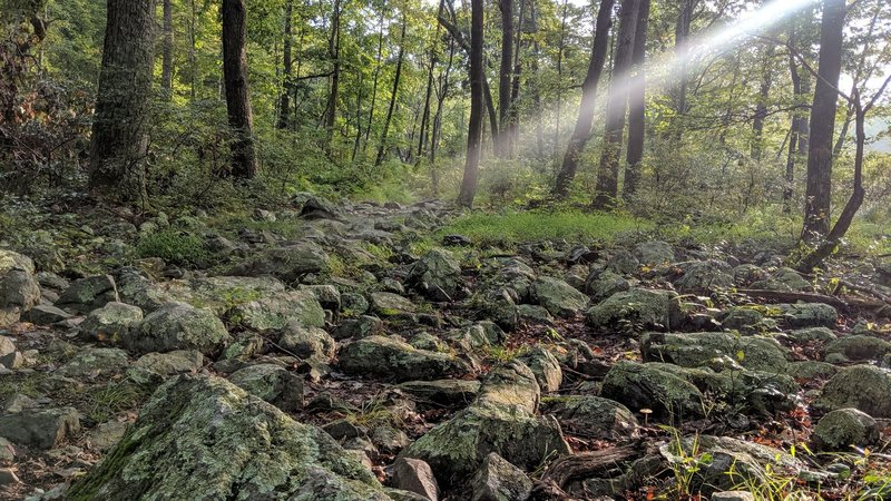 A lone ray of sunshine finally break through the morning fog on Dunnfield Creek Trail in the Delaware Water Gap NRA