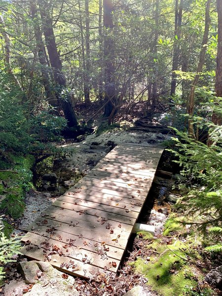 Bridge over the tannin-colored creek as you near the end of the trail.