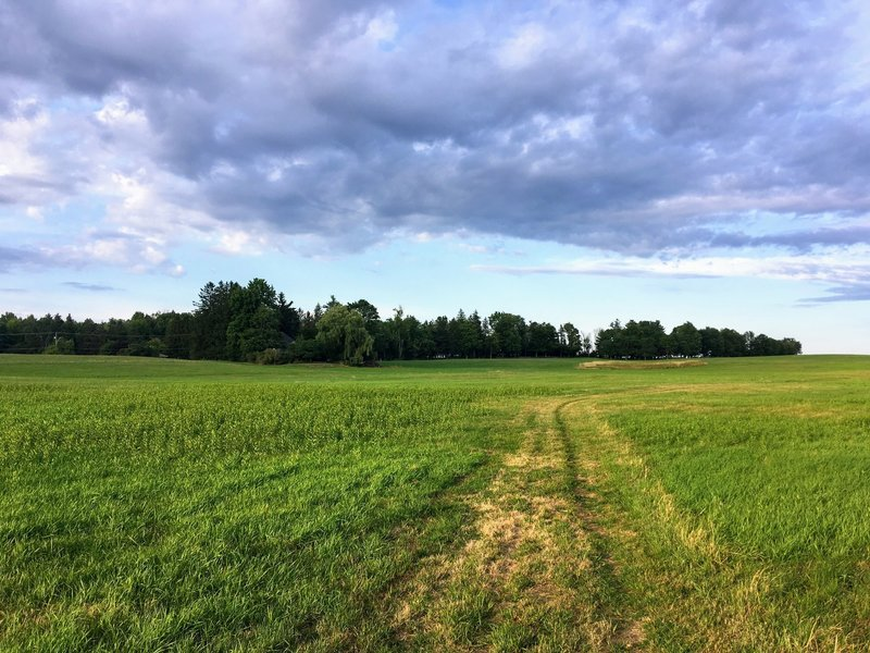 Green grass and blues skies while exploring the newly mowed fields in August