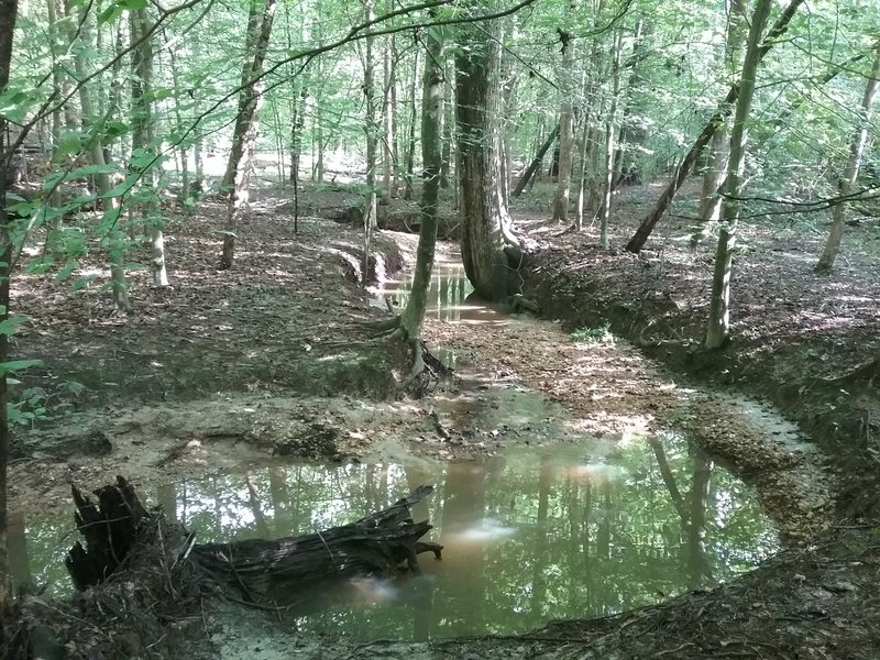 View of Sal's Branch.