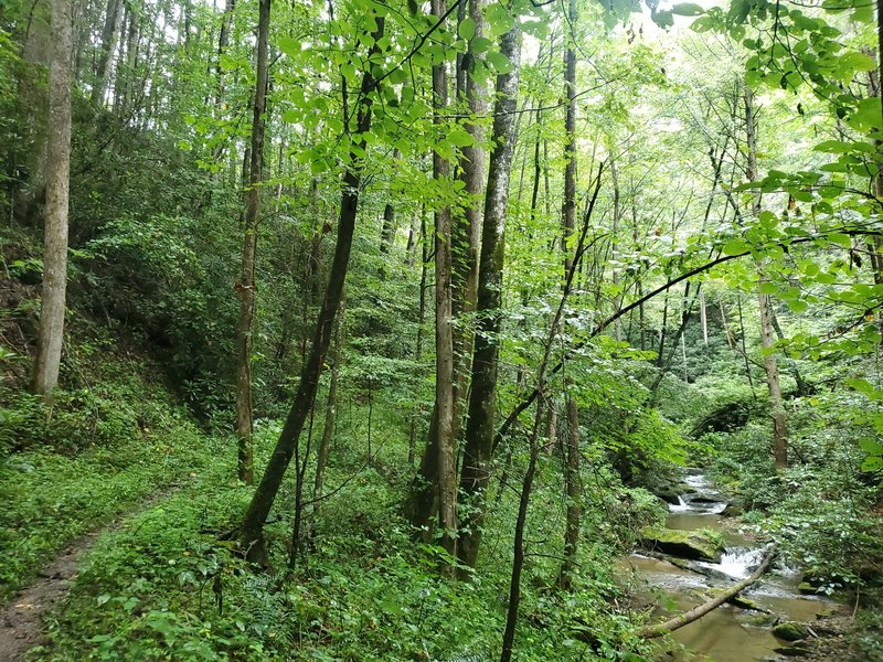 Mountaintown Creek and Trail.