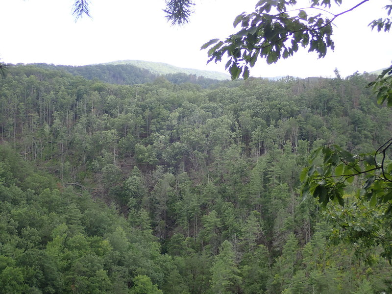 Walked down a small offshoot and found this great lookout point overlooking the valley.