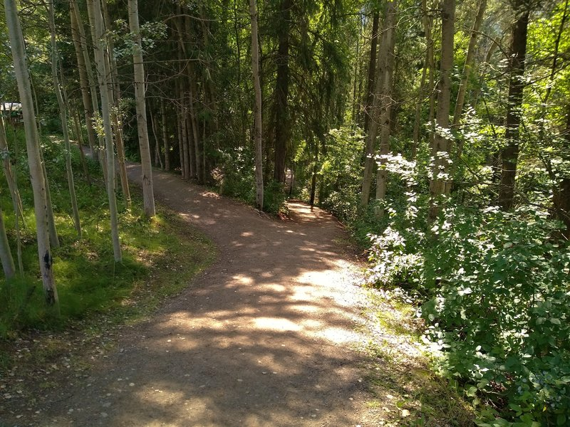The wide path to Rearguard Falls runs through the thick, beautiful mixed fir forest.