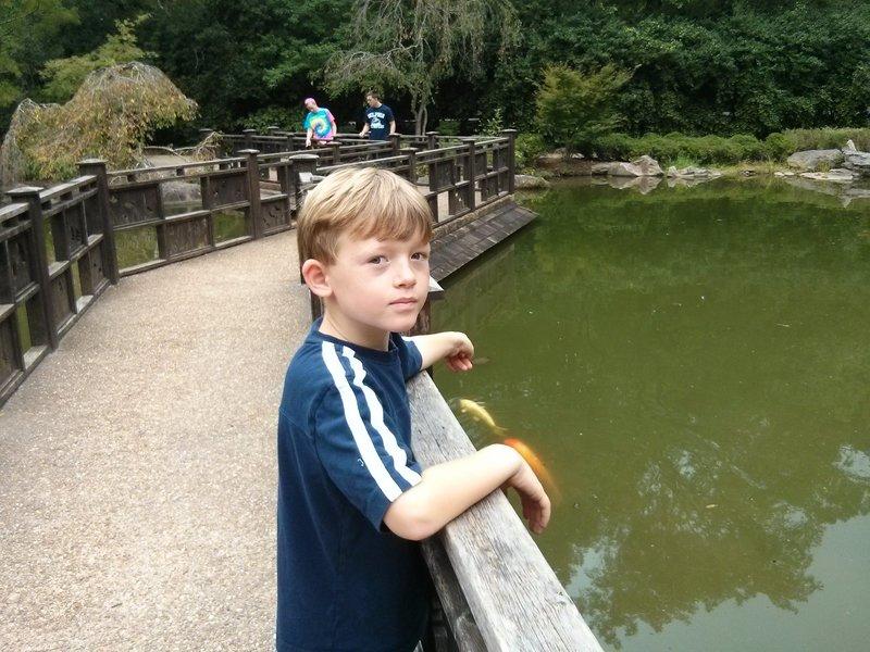 At the fish pond.