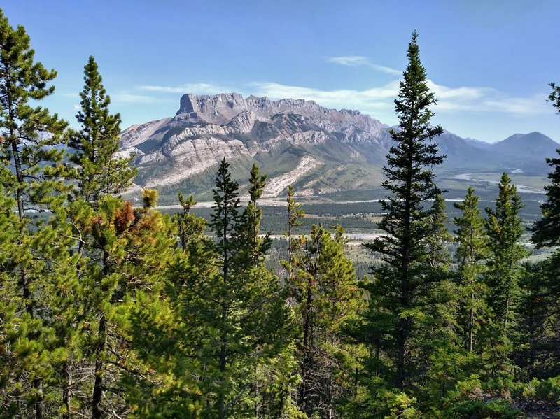 Roche Miette is seen through the trees, to the east, from Devona Lookout.