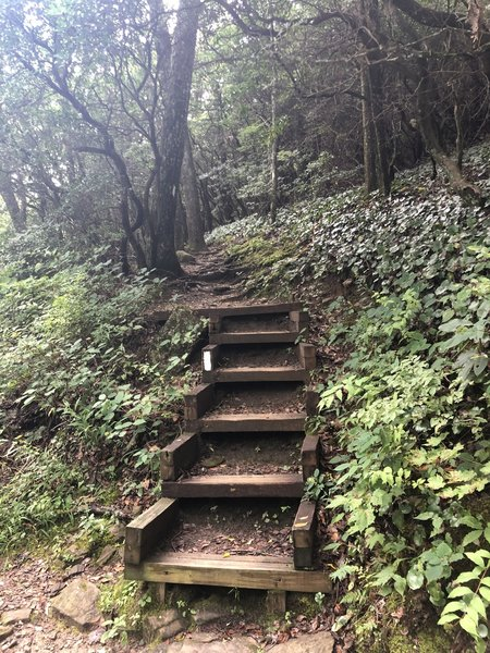 Unicoi Gap to Tray Mt. Rd. and back 14.07M trail run