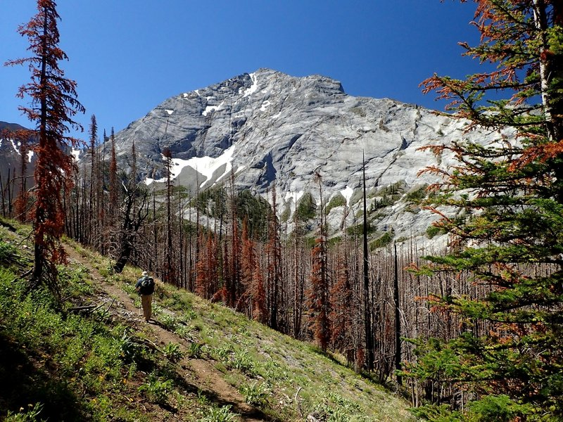 The north ridge of Sacajawea Peak from high on the Thorp Creek Trail.