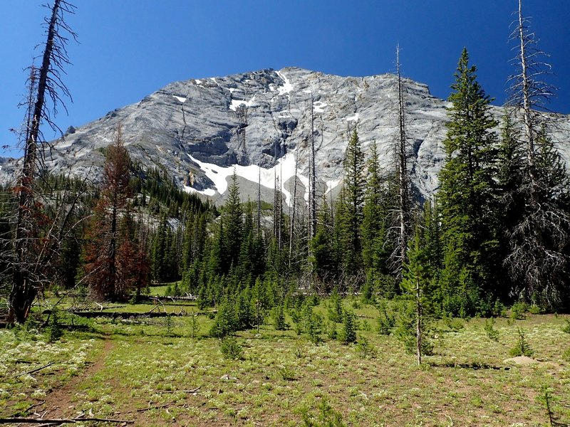 Sacajawea Peak from the north end of Thorp Creek meadow.