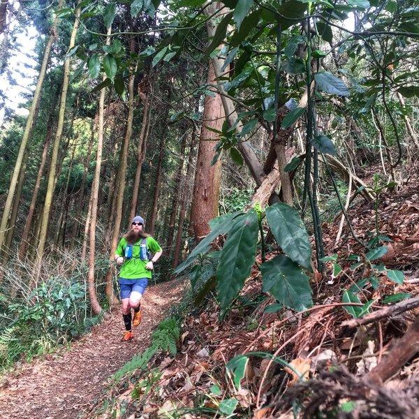 Running through a cedar forest.