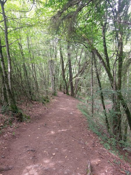 A more mellow section of trail