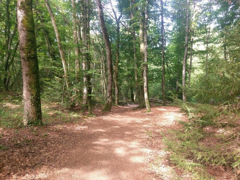 Enjoyable stretch of level ground in the Roc de Chere Nature Reserve