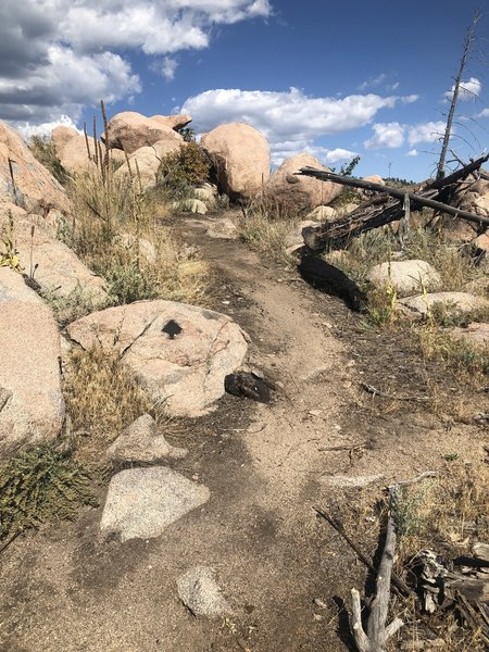Runnable section of trail