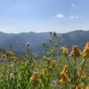 Trail 686 Meadows wildflowers